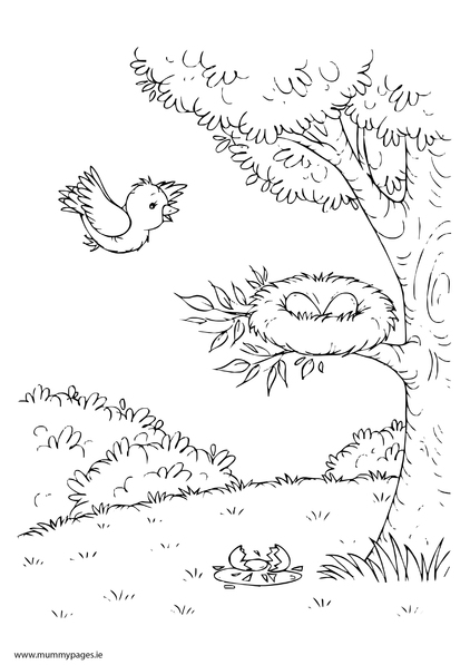 Spring Scene With Tree And Birds Nest Colouring