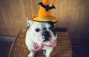 Dont put your pet at risk this Halloween - heres how to keep them safe and secure