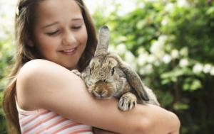How to pick up and hold your pet rabbit correctly
