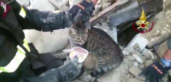 Amazing! Cat found ALIVE after being trapped for 15 days