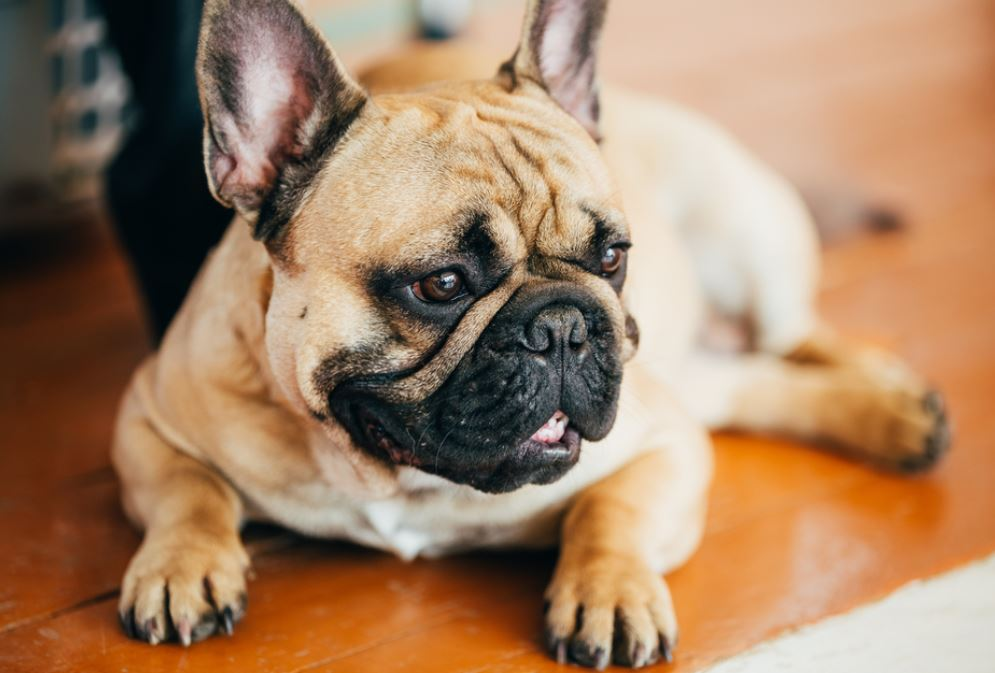 concerning trend animal lovers urged to not buy flat