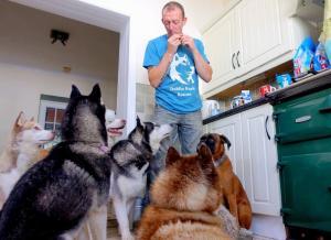 47 dogs, 100 meals a day... Kildare-based Husky Rescue Centre in CRISIS