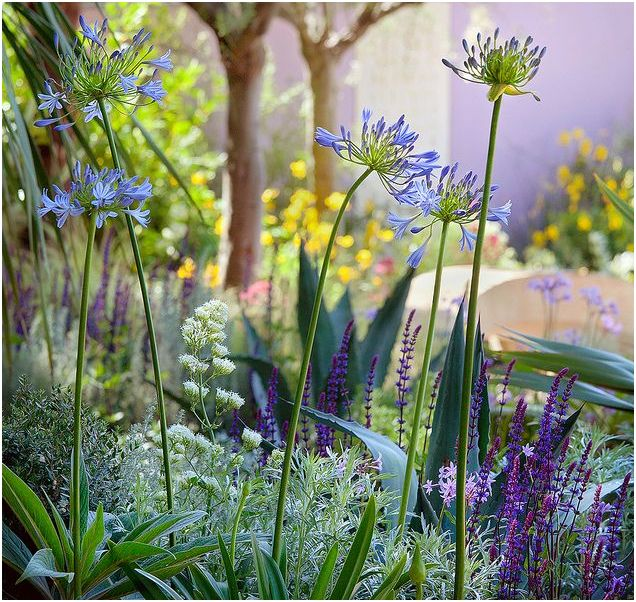 To see your garden full of vibrant flowers and plants is a wonderful ...